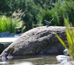 wassergarten-staefa-findling