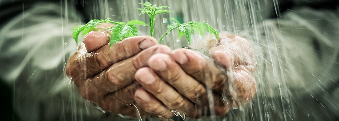 https://www.egligarten.ch/wp-content/uploads/2020/10/Regenwassernutzung-gross.jpg